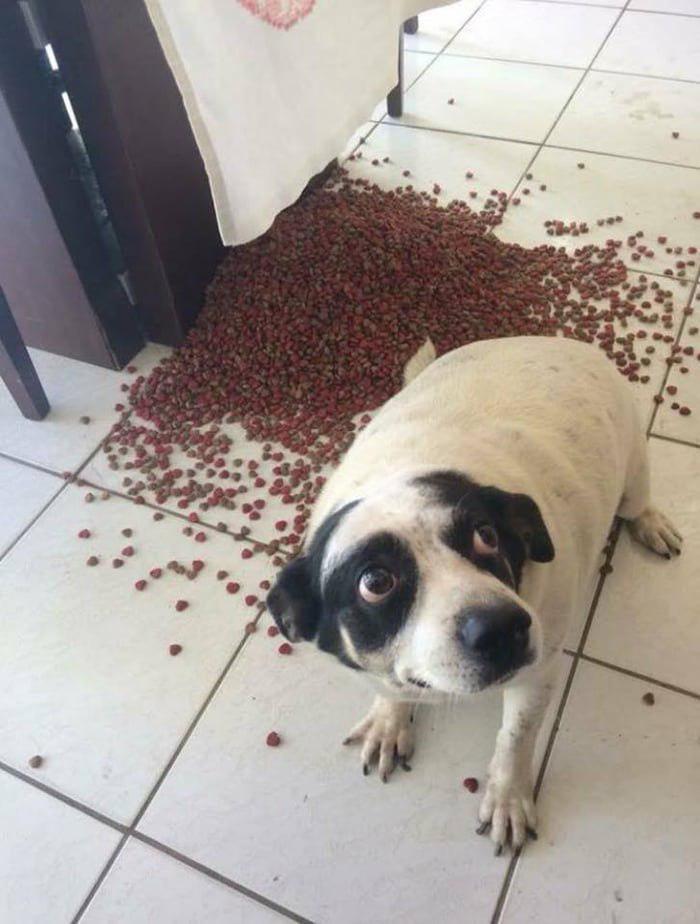 perro culpable