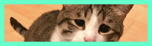 El gato que se ha hecho viral por estar siempre triste