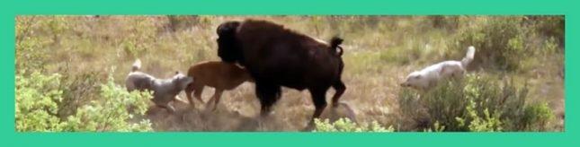 Madres protegiendo a sus hijos contra sus depredadores (Reino Animal)