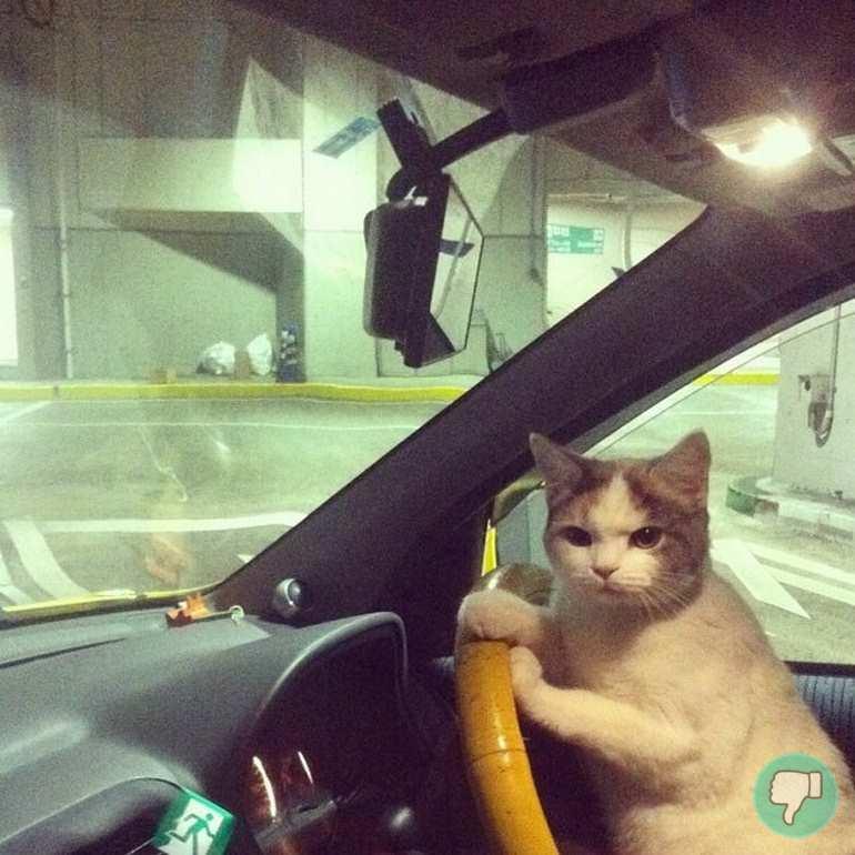 12 fotos de memes de gatos que no has visto todavía