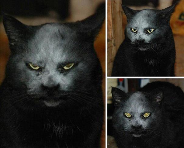 gato-diabolico